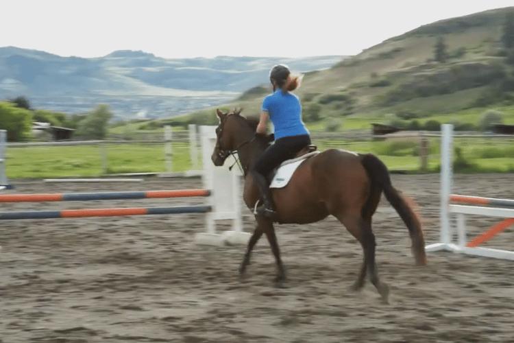 Vernon-Horse