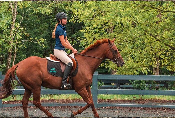 equitación estudiar en usa